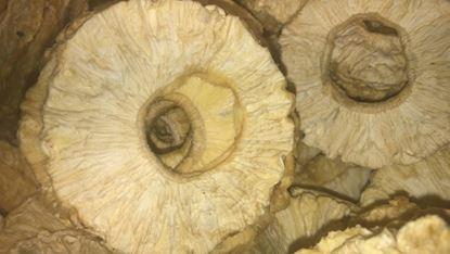 תמונה של אננס טבעי - 100 גרם